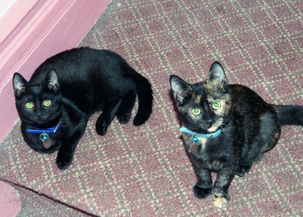 Michele_hollow_cats